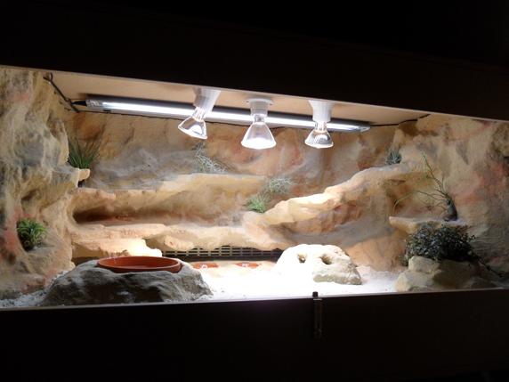 Bartagamen Terrarium Beleuchtung | tmp taubagamen terra 01